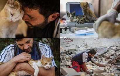 'Cat man of Aleppo' continues battle to care for distressed strays
