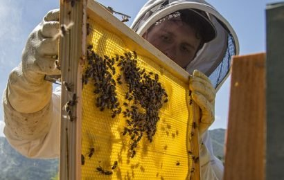 Beekeepers move bees above sea level amid concerns rising temperatures