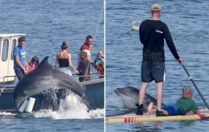 Dolphin delights holidaymakers as Brits flock to the beach for another 33C scorcher today – The Sun