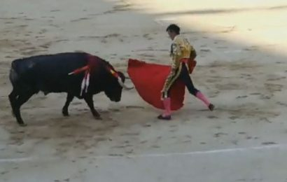 Matador gored by bull left writhing in agony – but he is still 'proud' of sport