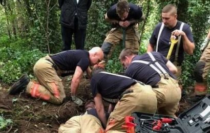 Moment dog is reunited with owner after being stuck in rabbit hole for 28 hours
