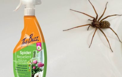 Arachnophobes swear by 99p spider repellent that keeps critters away