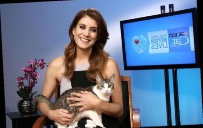 'Grey's Anatomy': What Is Kate Walsh (Addison Montgomery) up to Since 'Private Practice' Ended Besides Helping out Furry Friends?