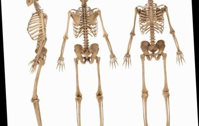Millions of Brits can't name the bones in their body