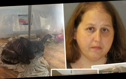 Police Remove Three Children and 245 Animals from 'Deplorable' Florida Home