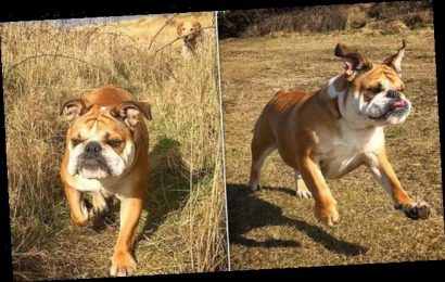 Pet owner wins £3,000 payout after bulldog Betty died of heatstroke