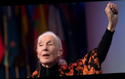 """It's So Important"": Conservationist Jane Goodall Champions Awards-Contending Documentary 'Sea of Shadows'"