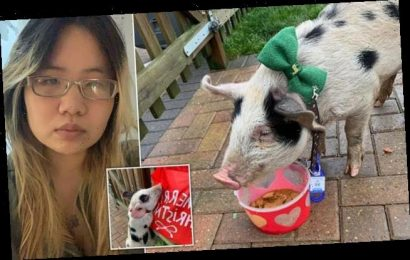 Vegan activist REUNITED with her pig for Christmas