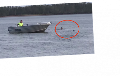 Bystander Stops Kangaroo From Drowning Dog: 'If I Wasn't There, That Dog Was Dead'