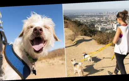 You can now hike through LA's Runyon Canyon with adoptable rescue dogs
