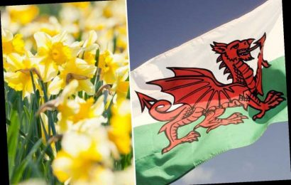Happy St David's Day! Why leeks, daffodils and dragons celebrate the Welsh national holiday