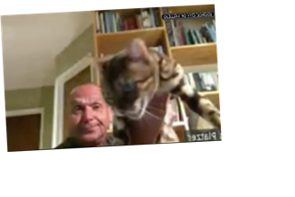 City Official Who Tossed Cat During Zoom Meeting Resigns From Commission