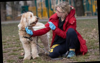 CDC extends coronavirus social-distancing guidelines to pets