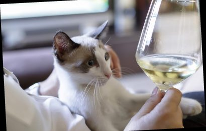 Pet Wine Shop Is Offering Free Cat Wine So You Can Drink With Your Feline During Quarantine