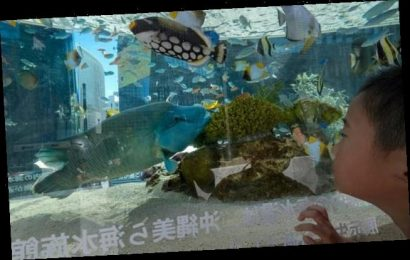 Aquarium pleads for people to video call their EELS in Japan