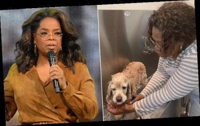 Oprah Winfrey has canceled ALL plans through the end of 2020
