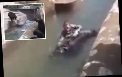 Drunk man tries to DROWN bear in front of horrified families after breaking into its zoo enclosure in Poland – The Sun