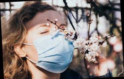 Harvard researchers figure out why coronavirus causes loss of smell