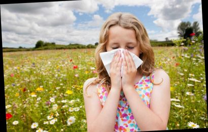 Millions of hay fever sufferers at risk of 'deadly asthma attacks' as weed pollen season kicks off