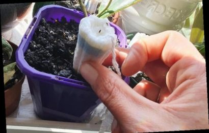 Woman reveals how she uses tampons to stop her plants from dying – and it works every time