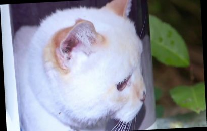 Voter registration form mailed to family's long-dead cat