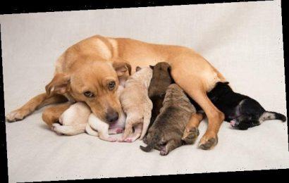 A quarter of puppies are taken from their mothers too young