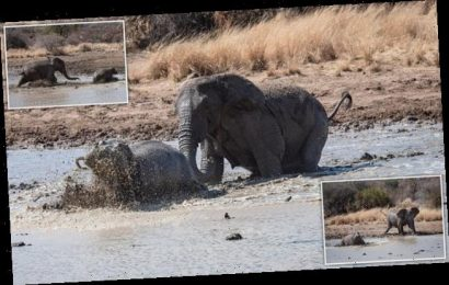 Elephants chase off hippos to claim the prime spot at watering hole