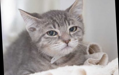 Arizona Shelter Cat Who Went Viral for Judgy Pout Deems Human Worthy of Adopting Him