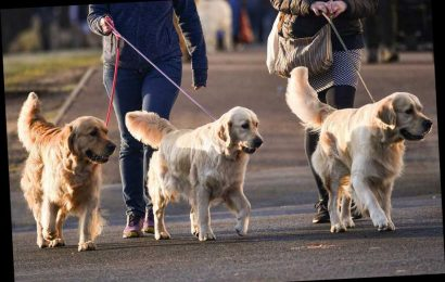 Dogs are the UK's favourite pet as they see off competition from cats to be crowned Brits' most popular animal