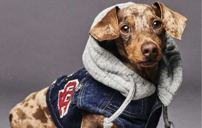 Dsquared2 Unveils Dog Apparel With Poldo Dog Couture
