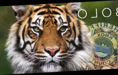 Search underway for tiger on the loose in Knoxville, Tennessee