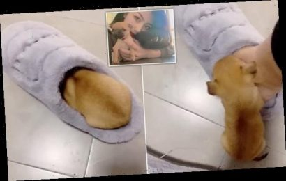 Puppy snuggles up to its owner's slipper to 'stay warm'