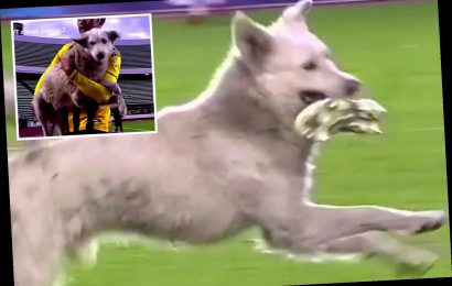 Adorable moment dog runs onto soccer pitch with player's cleat in Bolivia before star carries him off and ADOPTS him