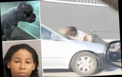 Crazy moment woman clings to moving car to 'stop thieves who stole $10k puppy'
