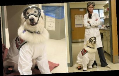 Dog becomes a research assistant at an Illinois chemistry lab