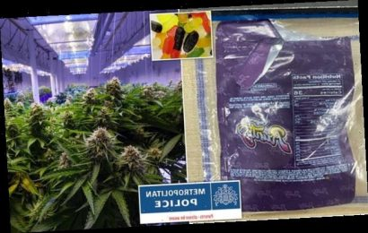 Children rushed to hospital after eating sweets laced with CANNABIS