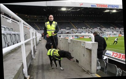 Sniffer dogs could pick up stealth Covid cases at football matches BEFORE tests can detect viral load