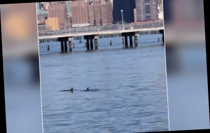 'A beautiful and majestic sight': Dolphins seen swimming in East River