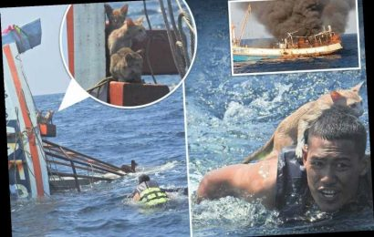 Hero sailor braves choppy seas to rescue four cats from smouldering ship