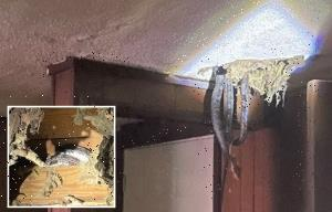 Family horrified as den of SNAKES burst through their ceiling as rats and cockroaches run riot