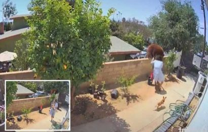 Crazy moment woman PUSHES BEAR off garden wall to stop it mauling her dogs in TikTok footage