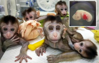 Inside China's horror labs where mutant monkeys are bred adding to theory that 'man-made' Covid leaked from facility