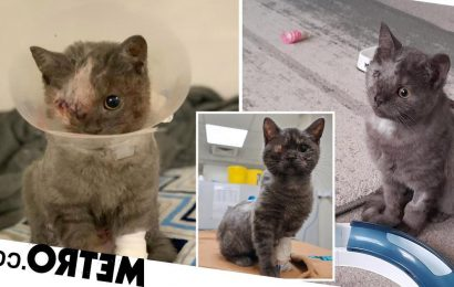 Kitten found with hole in heart and ruptured eye needs a new home