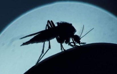 Why do mosquitoes drink blood? What makes them attracted to you?