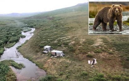 Grizzly bear terrorized man for days before he was rescued