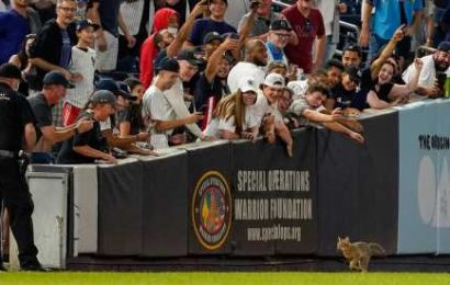 A Cat on the Field. A Mantis on a Hat. Monday Baseball Had It All.