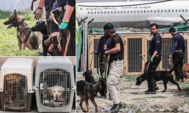 Bomb-sniffing dogs left behind at Kabul airport now work for Taliban